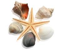 海扇壳构成 库存图片