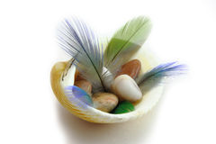 海扇壳用羽毛装饰鹦鹉 免版税库存照片