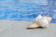 海扇壳水池 图库摄影