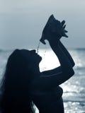 海扇壳 库存照片