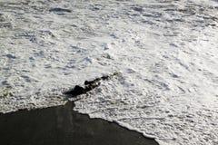 海挥动打破在与海泡沫的岸 免版税库存图片