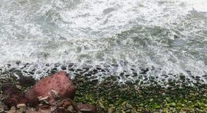 海挥动碰撞入海藻被盖的岩石 免版税库存图片
