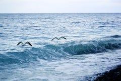 海明亮的美好的风景的照片 库存照片
