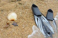 海星、壳和鸭脚板在海滨 免版税库存图片