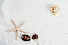 海星、贝壳和巧克力精炼机在白色沙子背景 库存照片