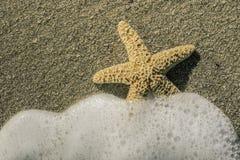 海星到波浪里 免版税库存图片