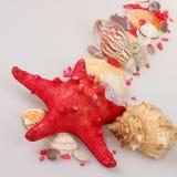 海星和壳 免版税库存照片