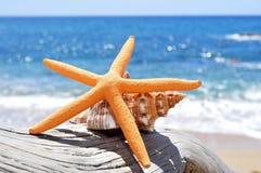 海星和巧克力精炼机在一个老被洗涤的树干在海滩 免版税库存照片