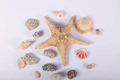 海星和温泉热的石头 免版税库存图片