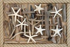 海星和漂流木头 免版税库存照片