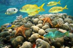 海星和热带鱼在珊瑚礁 库存图片