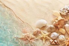 海星和贝壳在夏天在海水靠岸 夏天背景 新的成人 免版税库存照片