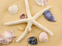 海星和贝壳在海滩沙子 库存照片