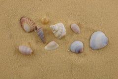 海星和贝壳在海滩沙子 库存图片