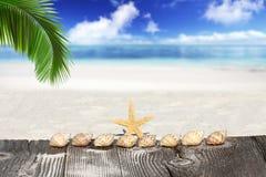 海星和贝壳在棕榈叶状体下 免版税库存图片