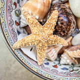 海星和贝壳 库存图片
