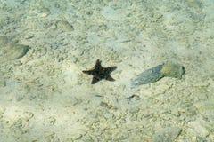 海星在古巴海 库存图片