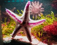 海星在水中 免版税图库摄影