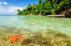 海星在清楚的水中 免版税图库摄影