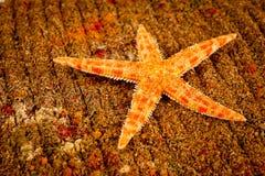海星明亮的橙色颜色射击特写镜头 库存照片