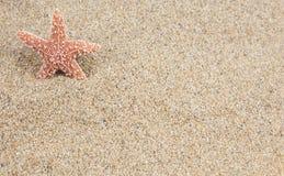 海星沙子背景 免版税库存图片