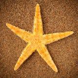 海星海星 免版税库存图片