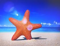 海星热带海滩沙子夏天海岛壳概念 库存图片
