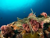 海星珊瑚礁 库存照片