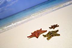 海星细节在沙子的 在蒙特奇湾海滩的晴天,牙买加 免版税库存图片