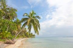 海星靠岸, Bocas del托罗,巴拿马 库存照片