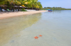 海星靠岸, Bocas del托罗,巴拿马 免版税库存图片