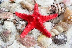 海星,海参和海运壳 免版税库存照片