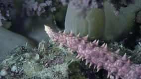 海星水下在海底背景在海洋 股票录像