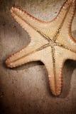 海星 库存图片