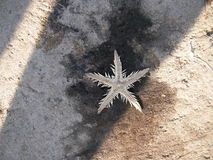 海星 库存照片