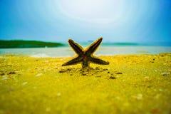 海星 免版税图库摄影