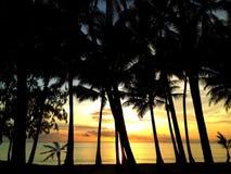 海景和棕榈树 免版税库存图片