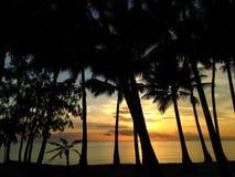 海景和棕榈树 图库摄影