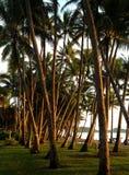 海景和棕榈树 免版税库存照片