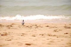 海景和鸟在泰国的东部 免版税库存照片