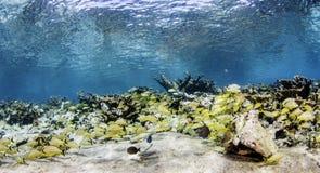 海景在古巴 库存照片