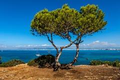 海景在马略卡 库存图片