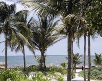 海景通过棕榈树 库存图片