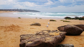 海景@卷毛卷毛海滩,悉尼澳大利亚 库存照片