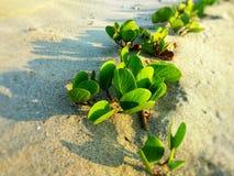 海植物 库存图片