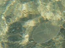 海水母在清楚的水中 皇族释放例证