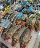 海水鱼品种在柜台的在希腊鱼购物 免版税库存图片