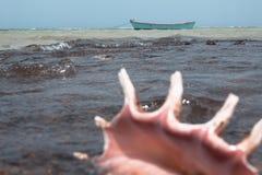 海沿海海岸在埃及,红海在非洲,壳在水的海浪小船 免版税库存照片