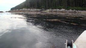 海泥和海藻在太平洋镇静水背景的在阿拉斯加沿岸航行 股票视频