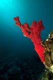 海洋、珊瑚和鱼 库存照片